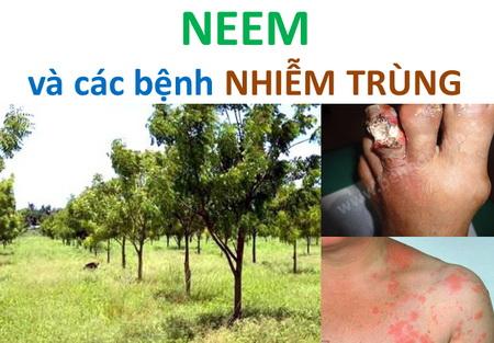 NEEM và các bệnh NHIỄM TRÙNG