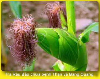 video Trà Râu Bắp (ngô) chữa bệnh Thận, Bàng Quang, Tuyến Tiền Liệt